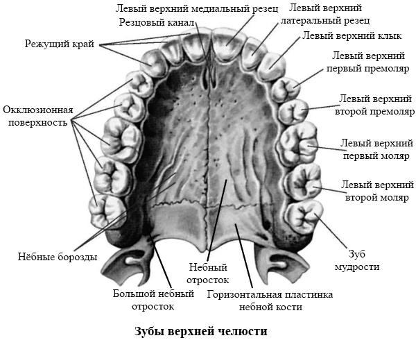 остеохондроза сустава
